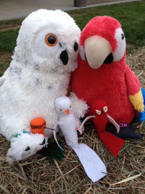 Stuffed-birds